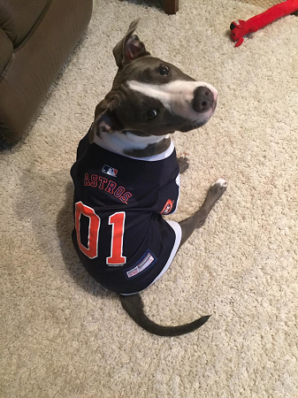 Houston Astros Dog Pet   Humans Gear 0f076e9cf