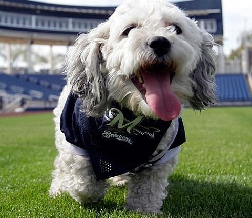Milwaukee Brewers Dog Pet   Humans Gear 698174adf1e9