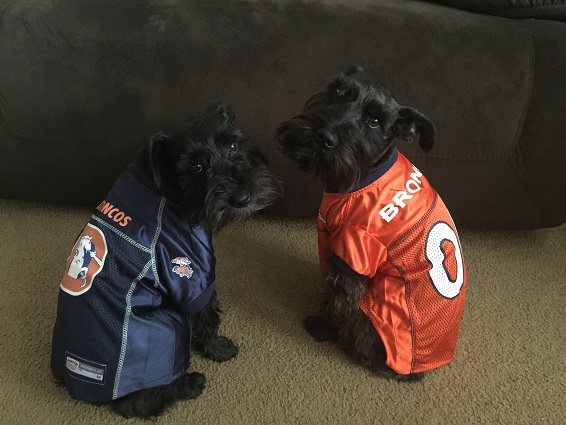 ce92a7be8 Denver Broncos Dog Pet & Humans Gear
