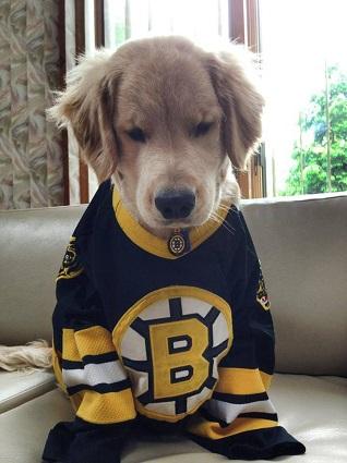 c9be5df1b Boston Bruins Dog Pet   Humans Gear