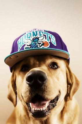 hornetsdog.jpg