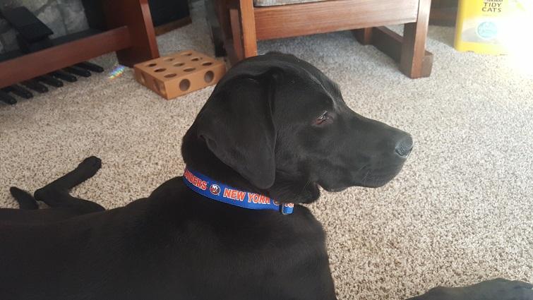 2a19a97ae New York Islanders Dog Pet   Humans Gear