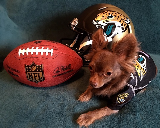Jacksonville Jaguars Dog Pet   Humans Gear 1683b3f5b
