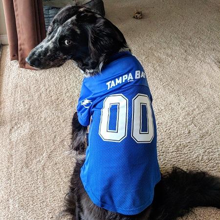 1f4725f20 Tampa Bay Lightning Dog Pet Humans Gear