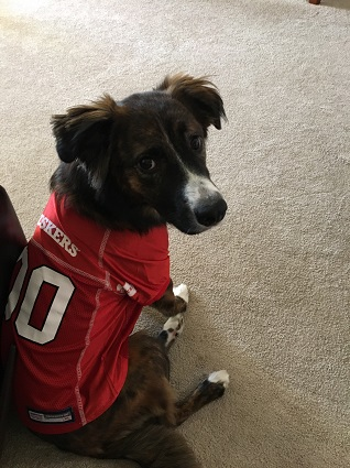 a82c0292c Nebraska Cornhuskers Dog Pet   Humans Gear