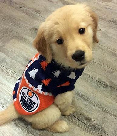 9d5baef44 Hockey - Edmonton Oilers - Page 1 - Spawty