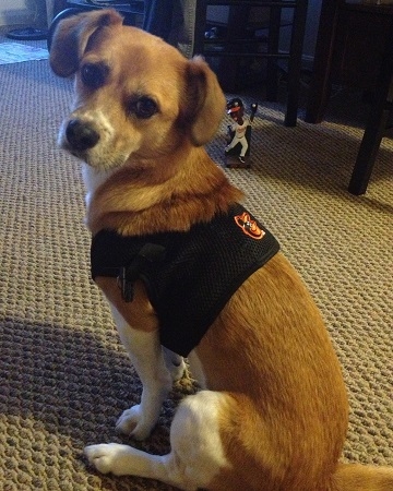 Baltimore Orioles Dog Pet   Humans Gear 198de386a