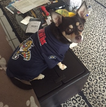 new style ebb38 9ce0a Florida Panthers Dog Pet & Humans Gear