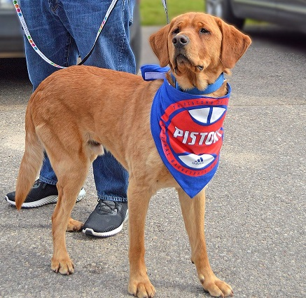 Detroit Pistons Dog Pet   Humans Gear c16a5d74f