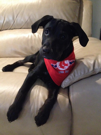 redsoxpup.png