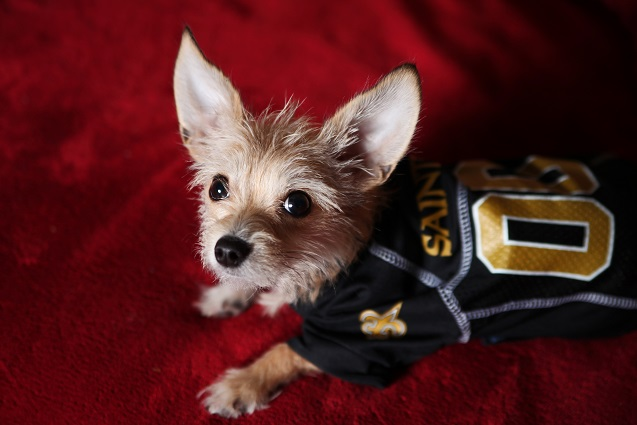 26a666e66 New Orleans Saints Dog Pet & Humans Gear