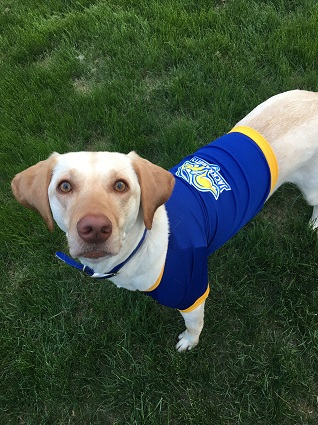 a5260cf2e South Dakota State Jackrabbits Dog Pet & Humans Gear