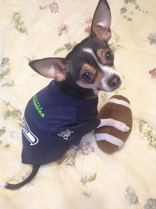 Seattle Seahawks Dog Pet   Humans Gear bf955ac28