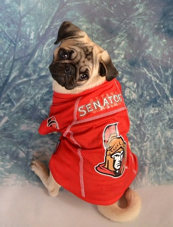 d2e6be5d7 Hockey - Ottawa Senators - Page 1 - Spawty